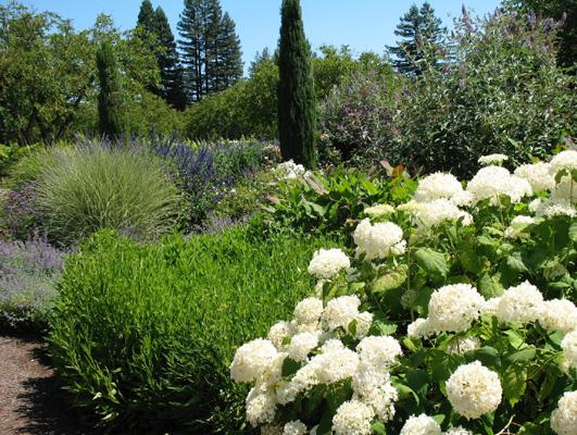 Der findes mange spændende stedsegrønne som i det rigtige forhold sammen med løvfældende planter bør bruges